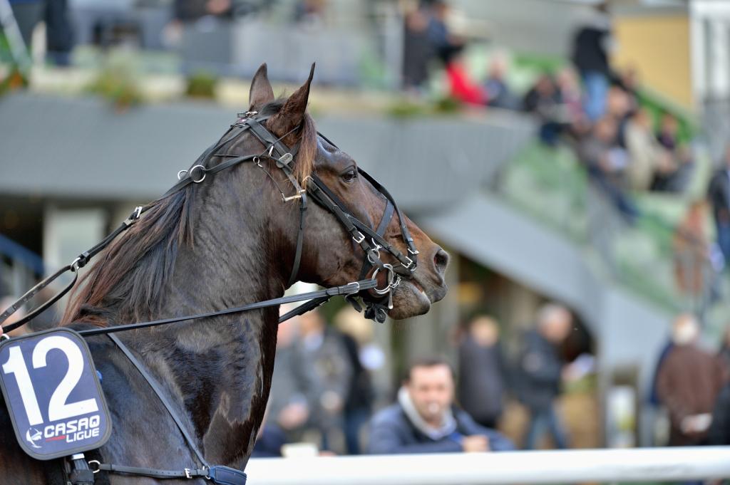 Prix de Bourgogne : le tremplin par excellence