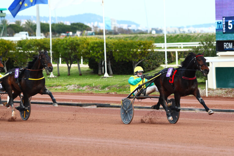 Prix d'Amérique Races ZEturf QUALIF #5: Vivid Wise As can trot fast