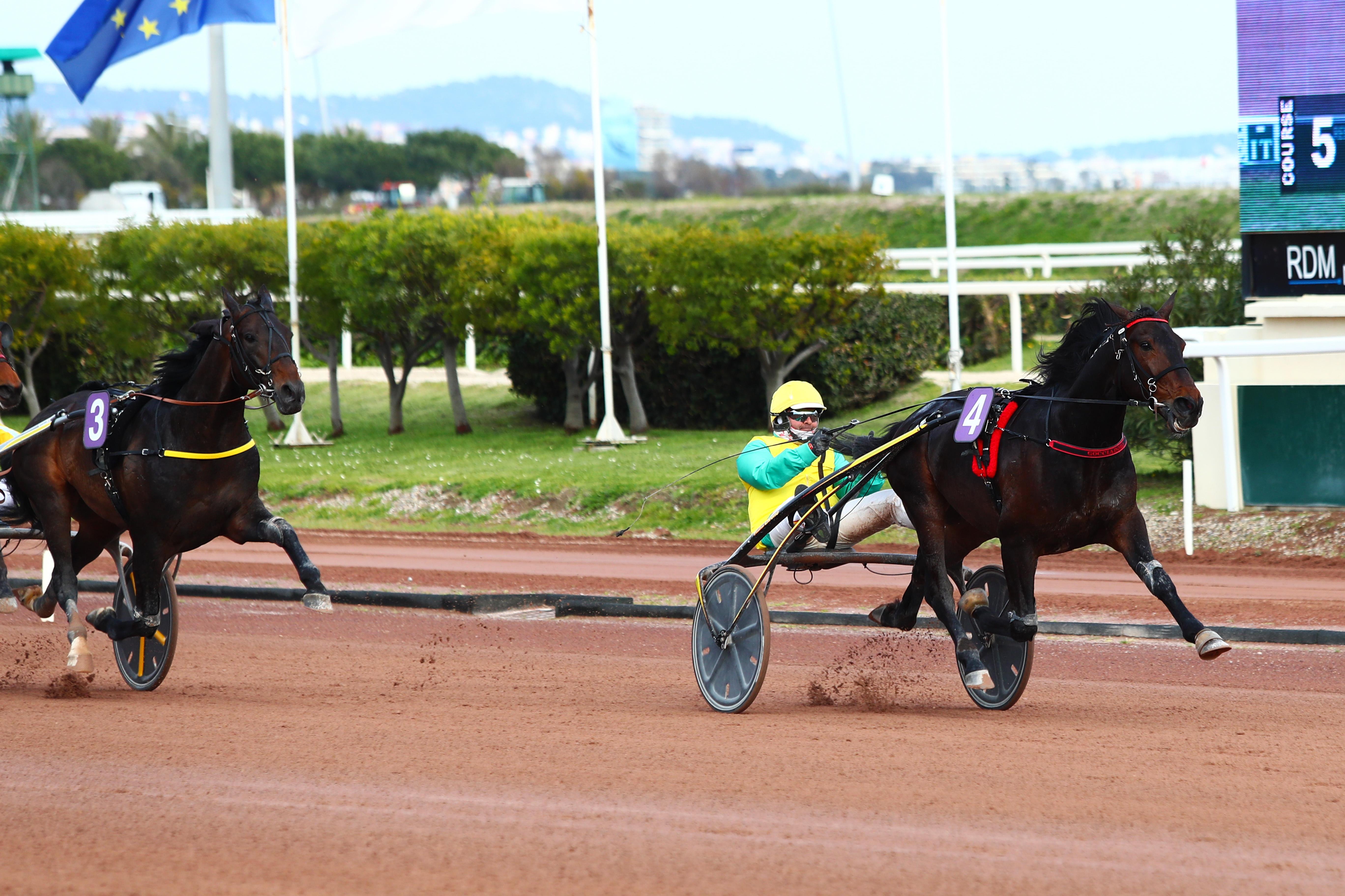 Prix d'Amérique Races ZEturf QUALIF #5: Vivid Wise As can trot fast