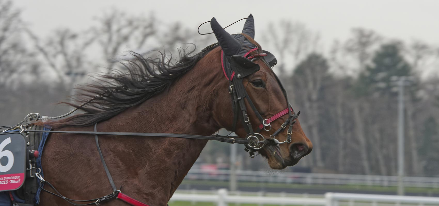 delia du pommereux prix d'amerique races ZEturf